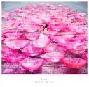 【主題歌】TV 恋は雨上がりのように ED「Ref:rain」/Aimer 初回生産限定盤の画像