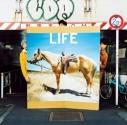 【主題歌】TV 銀の匙 Silver Spoon OP「LIFE」/フジファブリック 通常盤の画像