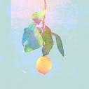 【マキシシングル】米津玄師/Lemon 映像盤の画像