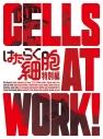 【DVD】TV はたらく細胞 特別編 完全生産限定版の画像