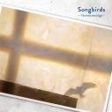 【主題歌】映画 リズと青い鳥 ED「Songbirds」/Homecomingsの画像