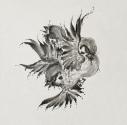 【主題歌】TV バック・アロウ 2ndクール ED「United Sparrows」/FLOW 通常盤の画像