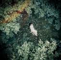 【主題歌】アニメ 7SEEDS OP「Ark」収録CD スターライトキセキ/天月-あまつき- 初回限定盤Bの画像
