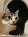 【グッズ-写真集】eoheoh(M.S.S Project) 僕ん家の猫(仮)の画像