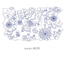 【アルバム】nano.RIPE/シアワセのクツ 初回限定盤の画像